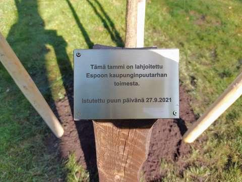 Puun päivän tammen merkkipäivälaatta Laaksolahdessa Kuttulammen puistossa.