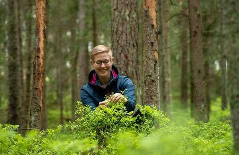 Iloinen ihminen metsässä kyykistyneenä mustikanvarpujen ääreen.